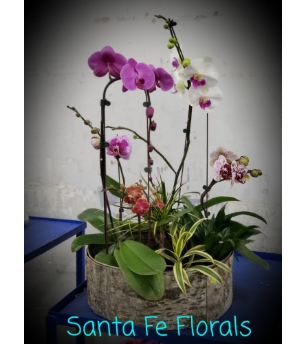 XL/ONE SIZE CUSTOM PLANTS & ORCHIDS