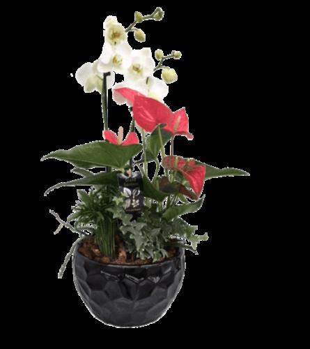 Black Round Orchid Planter