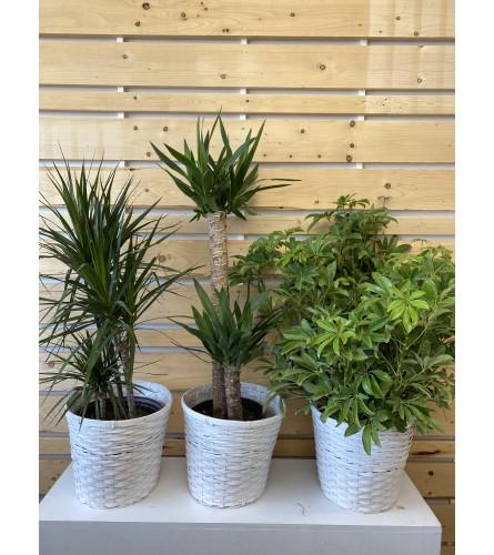 "Tropical Plant 10"""