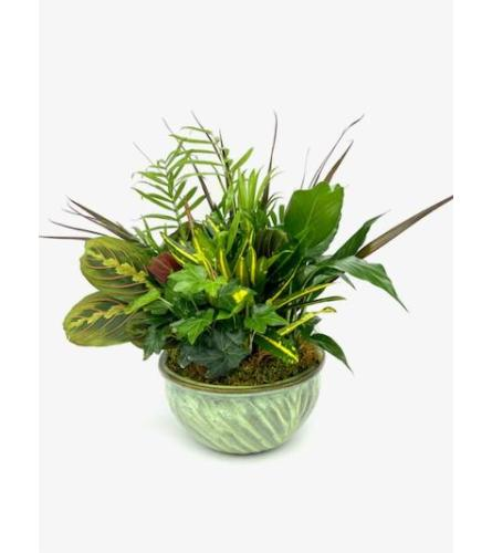 8inch Dish Garden (Flower Pot Color and Style may Vary)