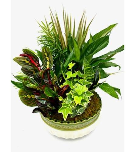 10inch Dish Garden (Flower Pot Color and Style may Vary)