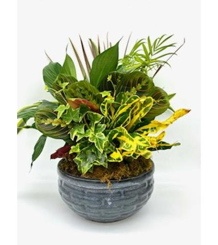 10 inch Dish Garden (Flower Pot Color and Style may Vary)