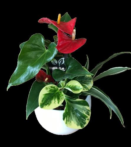 Mixed Planter