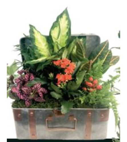 Penny Flowering Metal Chest Dishgarden
