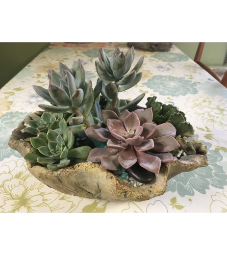 Succulent Stone