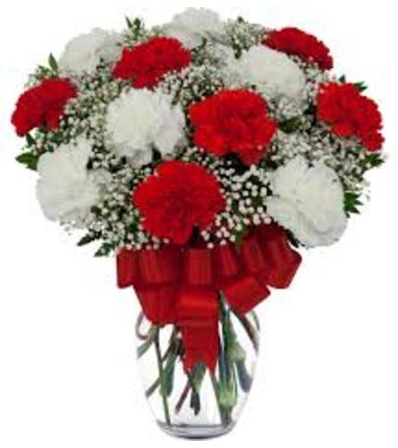 Classic Red and White carnation in vase