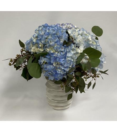 Blue Hydrangea LaRue