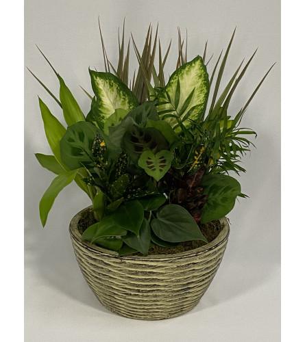 Into the Garden - Plant bouquet