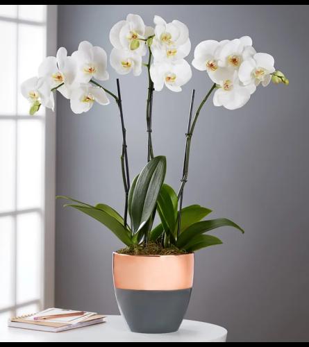 Modern Orchids in Ceramic