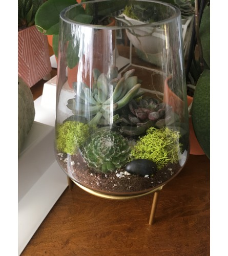 Glass Terrarium with Succulents