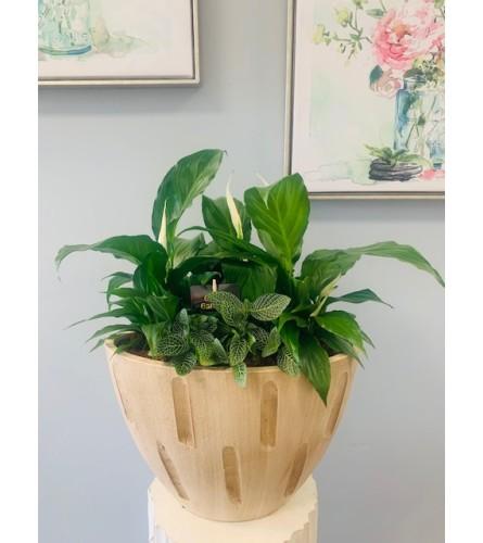 Cream Sympathy Planter XL