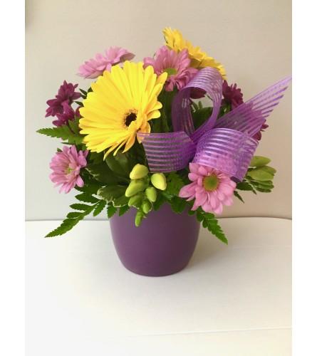 Purple Daisy Mix