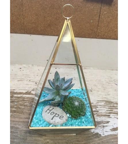 Succulent Gold terrarium