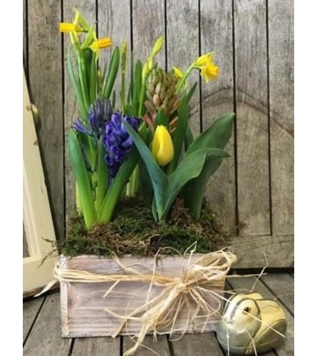 Spring 2021 Bulb Garden