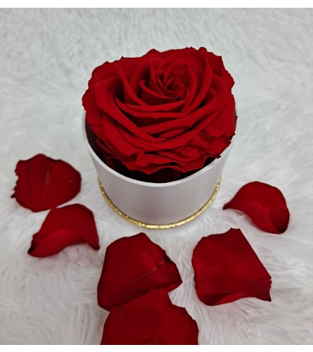 Single Preserved Red Rose in Round Box