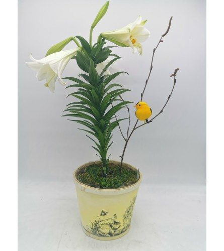 Cheery Easter Lily