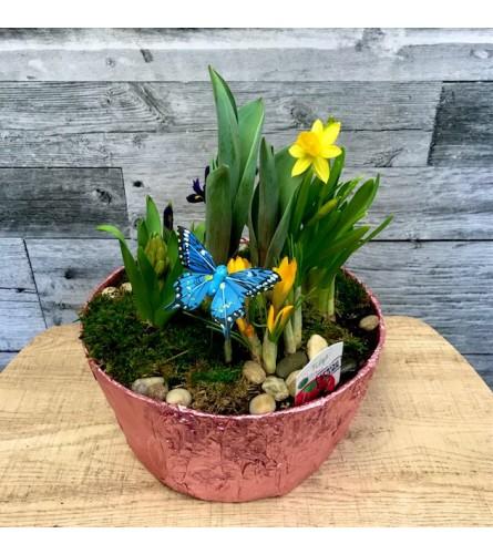 "10"" Spring Bulb Planter"