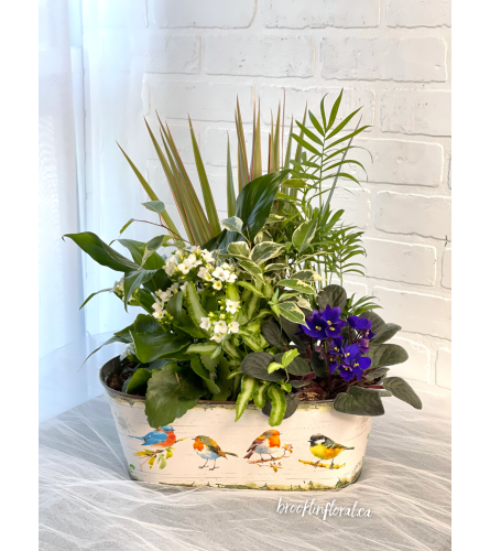 Bird Lover's Dish Garden