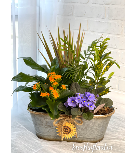 Tropical Garden w/ Sunflower