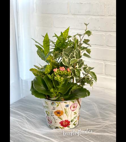 Tropical Garden in Flower Pot