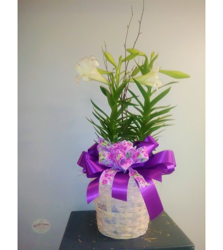 """8"""" Double Stem Easter Lily Plant"""