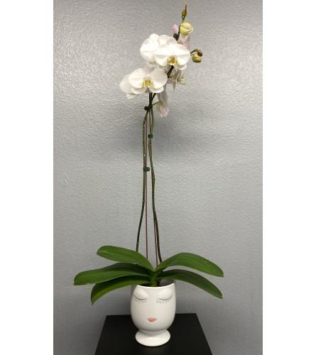 Selfie Orchids