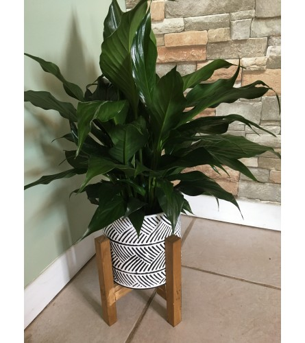 Peace Lily Plant with Metal Planter and Stand