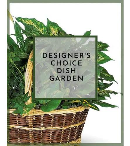 Designer choice dish garden