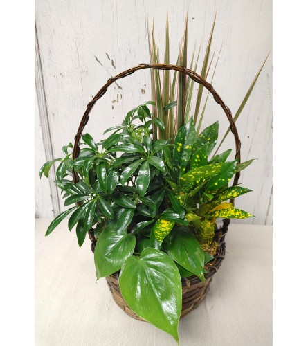 "8"" Basket Dishgarden"