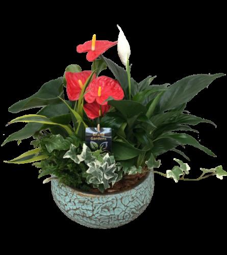 Crackle XL planter with Anthurium