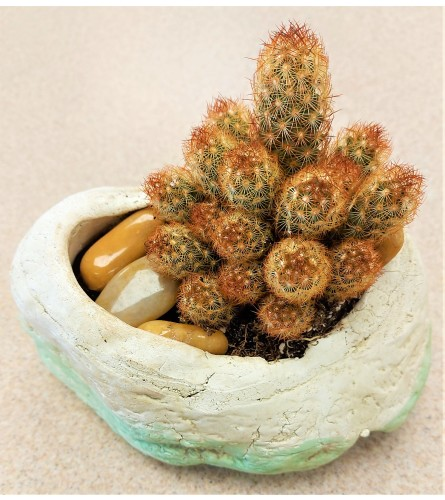 Colasanti's cactus by O'Flowers