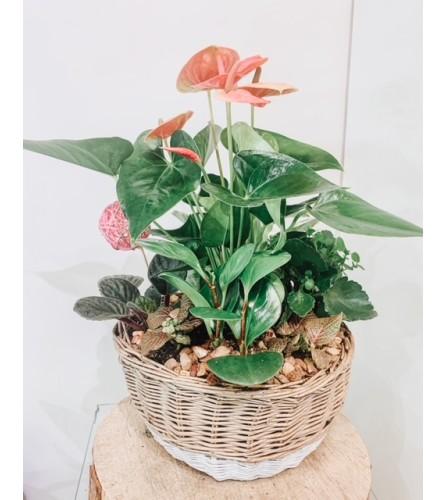 Plant Arrangements - Tropical Paradise