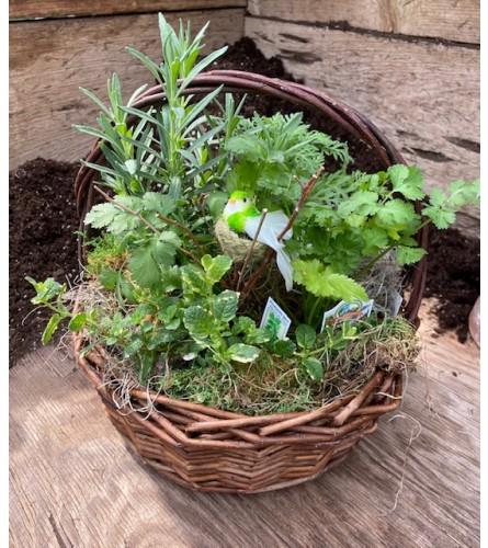 Rothe's Herb Garden - Locally Grown