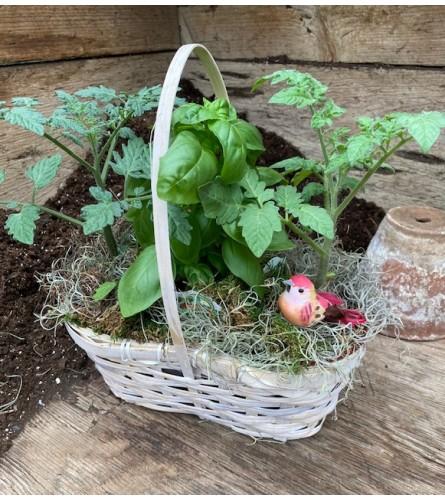 Tomato & Basil Herb Garden - locally grown