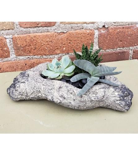 Natural Succulent in Stone