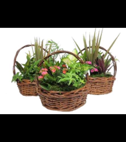 Rustic Basket Planter