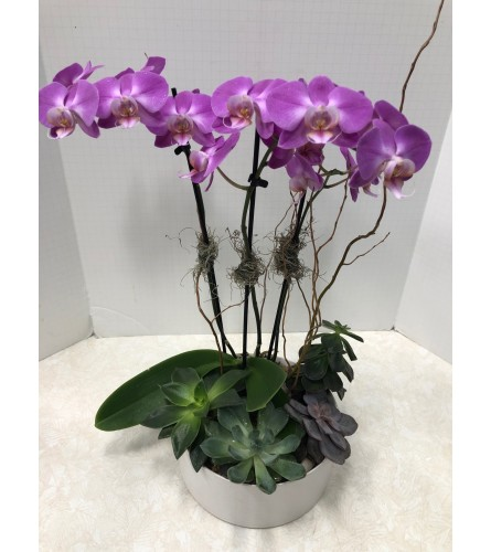 Orchid and Succulents Garden