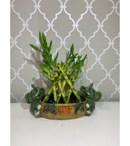 Double Trouble Bamboo in Elephant Vase