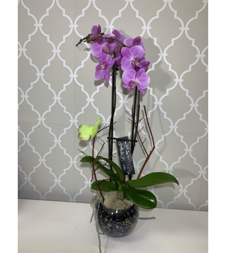 Pretty Purple Orchid