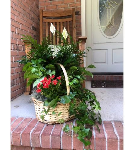Bloom Plant Basket