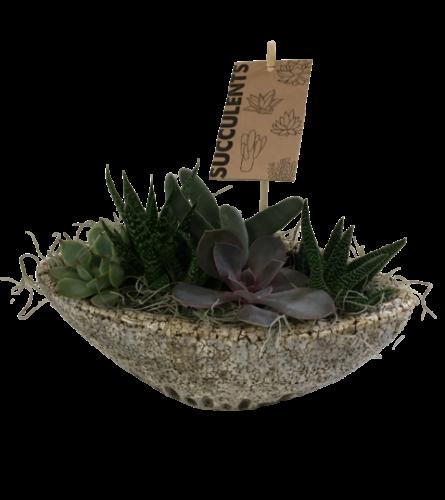 Stone Succulent Boat
