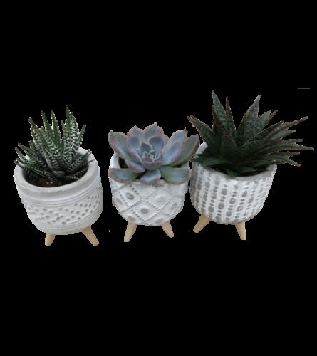 3 Pack Pedestal Succulents