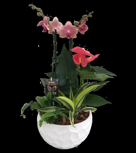 Round Ceramic Orchid Planter