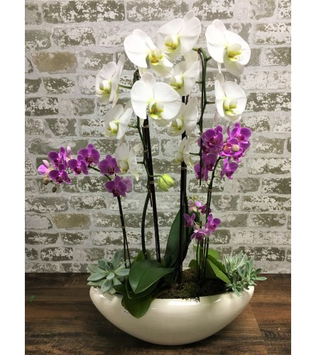 Croziers Orchid Special
