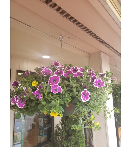Mixed Flower Hanging Basket