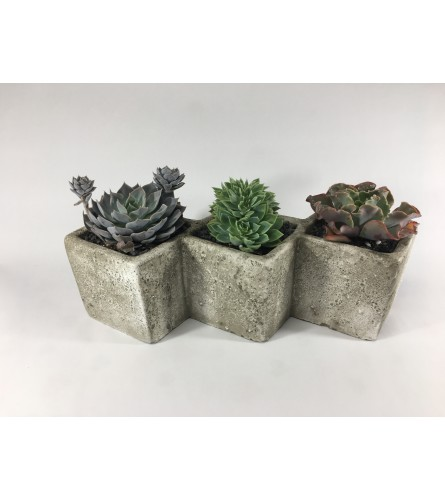 Three amigos Succulent planter