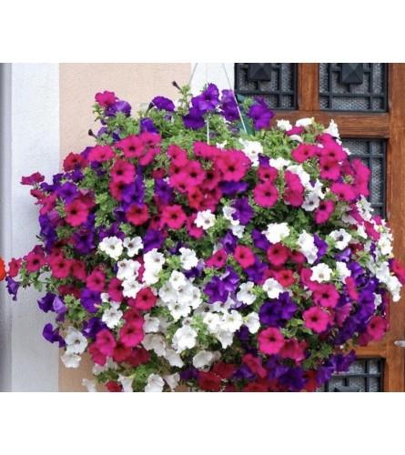 Petunia Hanging baskets, various sizes