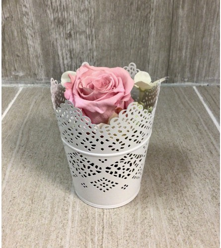 Pink Victorian Lace Preserved Rose