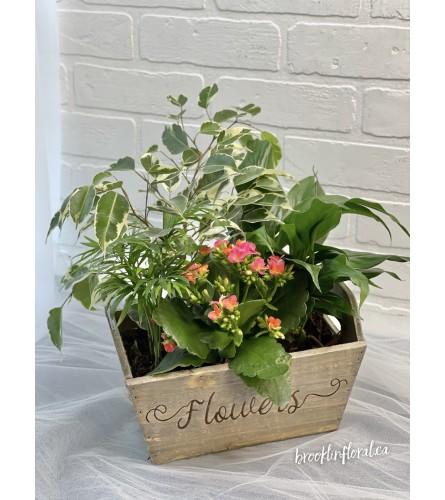 """Flowers"" Tropical Garden"