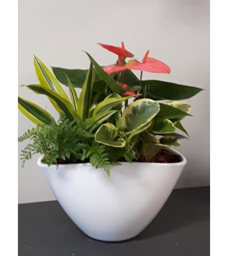Oval anthurium planter